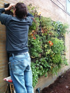 Plant wall being constructed