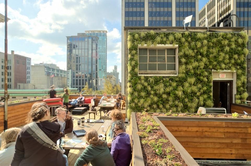 Roof Top Wall Garden