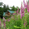beautiful wild flowers with a log home in the background