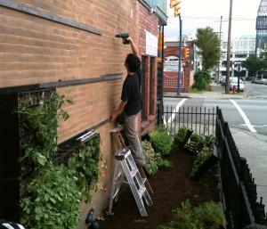 vertical garden installation