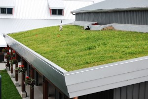 grass roof top