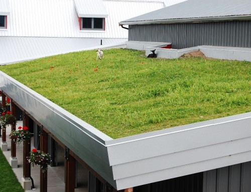 Green Roofs and Living Walls