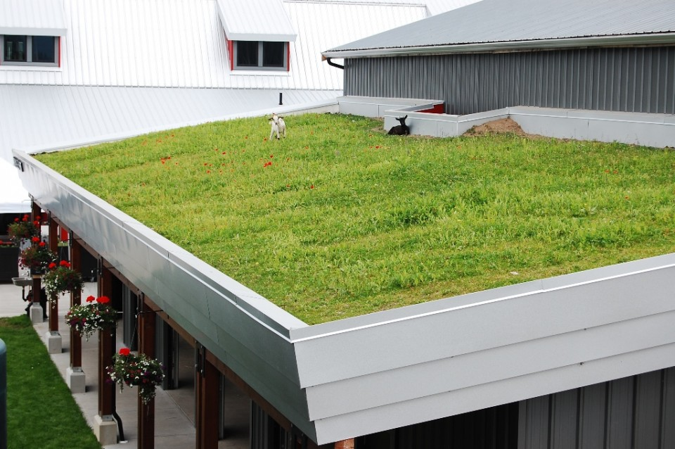 grass roof top