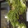 creative wall garden